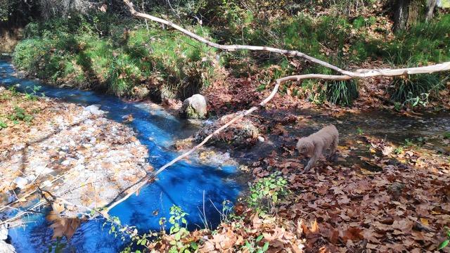 El Caicena se tiñe de azul tóxico 1