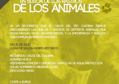 Taller medioambiental del ecomuseo - rastros de animales